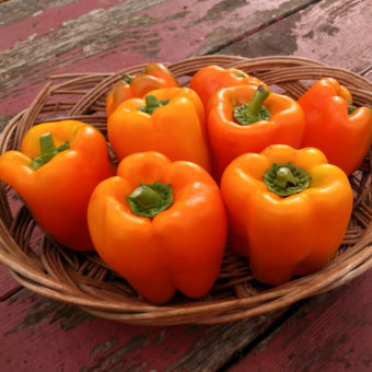 Sweet Pepper, Etiuda (Organic)