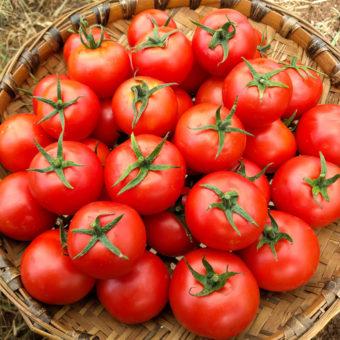 Pilu KS Tomato