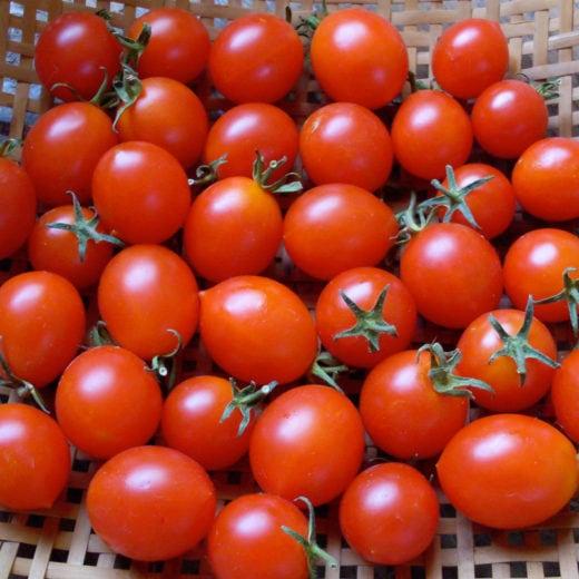 Red Centiflor Tomato