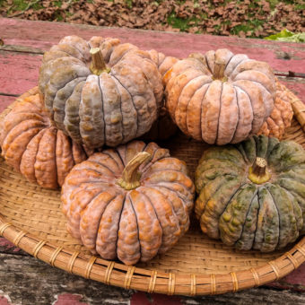 Winter Squash, Black Futsu (Organic)