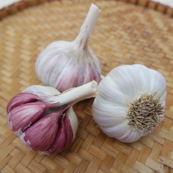 Donostia Red Garlic