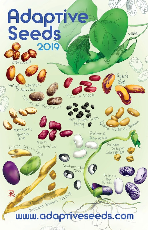 2019 Adaptive Seeds Catalog Cover