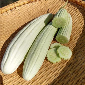 Armenian Cucumber, Tortarello Abruzzese Bianco (Organic)