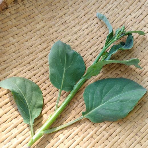 Blue Star Gai Lan Chinese Broccoli