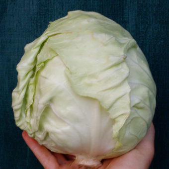 Primax Cabbage